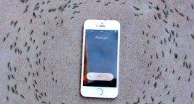 Des fourmis encercle mystérieusement un iphone