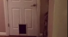 Une manière de franchir une porte que seul un chat peut exécuter